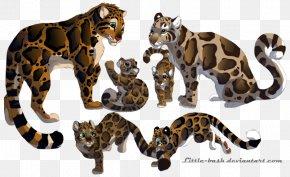 Leopard - Clouded Leopard Pumas Tiger Felidae PNG