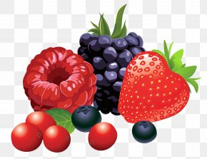 Forest Fruits Vector Clipart Image - Berry Fruit Clip Art PNG