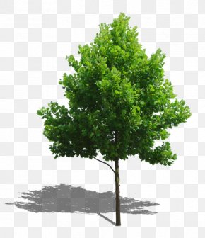 Trees - Tree Plant Computer File PNG