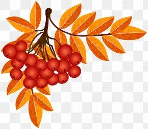 Fall Decoration Clip Art Image - Autumn Leaf Clip Art PNG