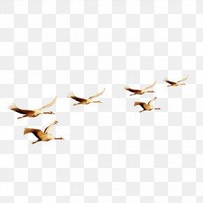 Flying Bird Material - Bird Flight Bird Flight Euclidean Vector PNG
