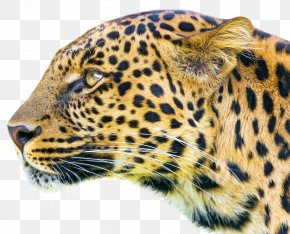 Leopard - Android Application Package Blue Mobile App Eye PNG