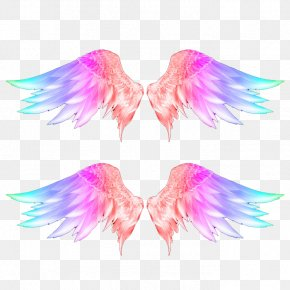 Color Wings Photos - Wings Feather Download PNG