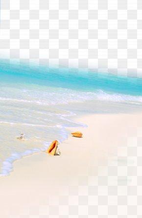 Summer Beach - Sea Beach Shore PNG