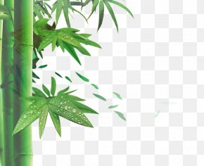 Green Bamboo - Zongzi Dragon Boat Festival U7aefu5348 Bamboo Poster PNG