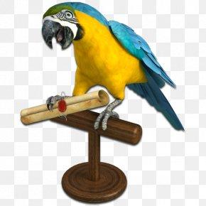 Pirate - Parrot Piracy Clip Art PNG
