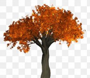 Autumn Tree - Tree PNG