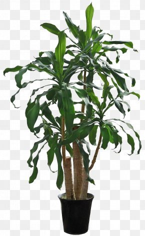 Green Yemen Iron - Houseplant Flowerpot Tree PNG