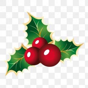 Christmas - Mistletoe Phoradendron Tomentosum Christmas Viscum Clip Art PNG