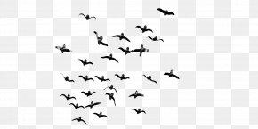 Bird - Bird Flight Bird Flight Flock PNG