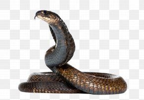 Snake Hd - King Cobra Snake PNG