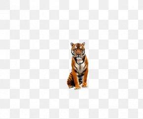 Tiger Zoo - Tiger Bengal Big Cat Wildlife PNG