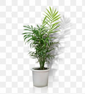 Potted - Flowerpot Crock Houseplant Bonsai PNG