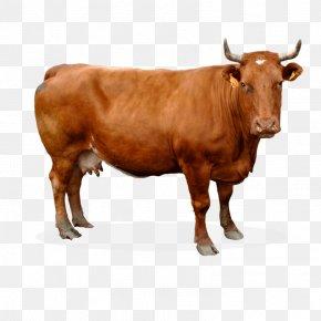 Texas Longhorn Animal Figure - Sahiwal Cattle Bovine PNG