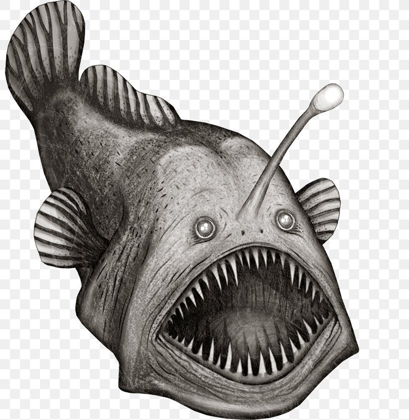 Drawing Black And White Fish Clip Art Png 800x842px Drawing Anglerfish Black And White Deep Sea