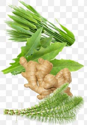 Barley - Superfood Leaf Vegetable Nutrient PNG