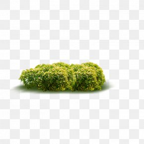 Shrubs - Shrub Acalypha Hispida Plant PNG