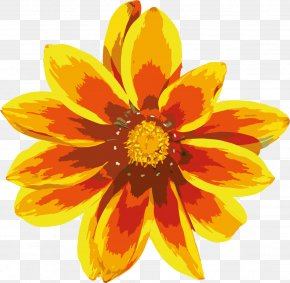 Gazania Clipart - Common Sunflower Calendula Officinalis Yellow PNG