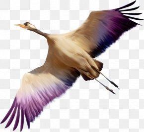 Bird - Bird PNG