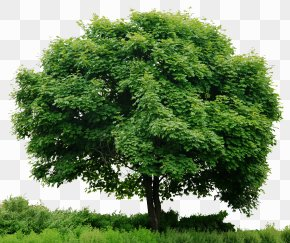 Tree In - Look At Trees Clip Art PNG