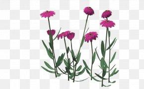Pink Chrysanthemum - Chrysanthemum Indicum Euclidean Vector Floral Design PNG