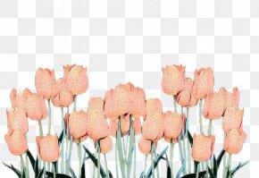 Herbaceous Plant Plant - Floral Spring Flowers PNG