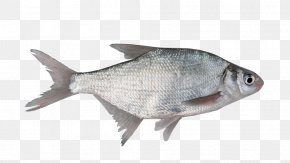 Fish - Fish As Food Milkfish Organism Freshwater Fish PNG
