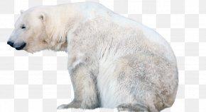 Bear Polar - Polar Bear Clip Art Image PNG