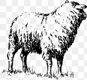 Goat - Dairy Cattle Badger Face Welsh Mountain Sheep Goat Merino PNG