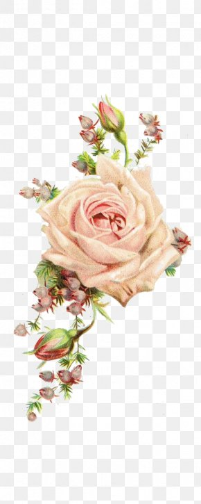 Rose - Paper Centifolia Roses Vintage Clothing Antique PNG