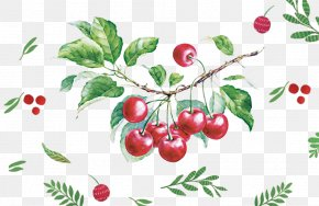 Hand-painted Cherry - Watercolor Painting Drawing Fruit Illustration PNG