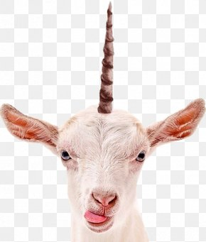 Goat - Goat Milk Stock Photography PNG