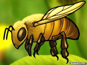 Honey Bee Drawing - Honey Bee Drawing How-to Clip Art PNG