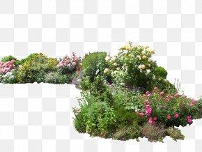Plants Photo - DeviantArt Flower Garden PNG