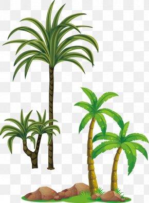 Coconut Tree Vector - Tree Arecaceae Clip Art PNG