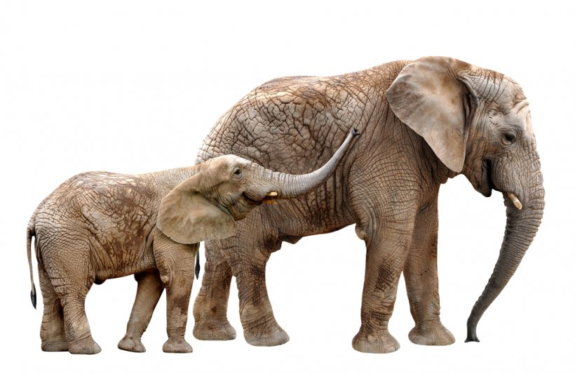 Asian Elephant African Bush Elephant Rainbow Yorkshire Ltd Mural Elephants Png 1024x666px Asian Elephant African Bush Elephant png free vector we have about (61,541 files) free vector in ai, eps, cdr, svg vector illustration graphic art design format. asian elephant african bush elephant