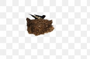 Nest In The Family Yan - Barn Swallow Pxe4xe4skysenpesxe4keitto Nest PNG