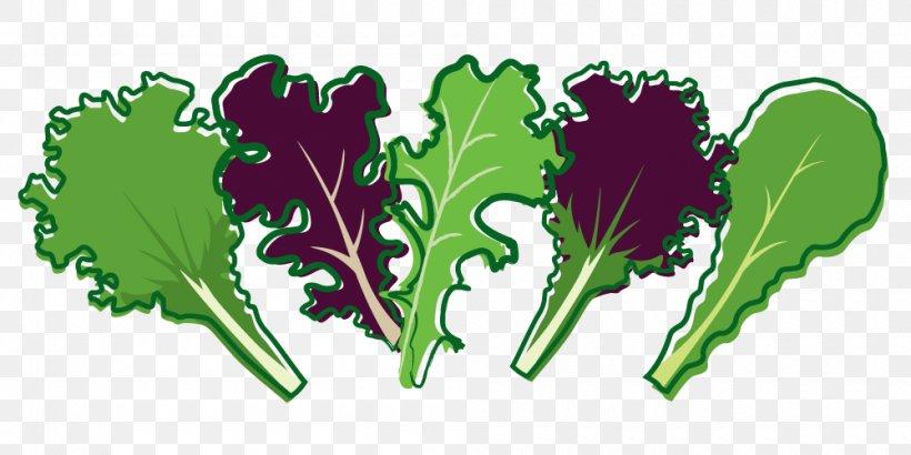 Leaf Vegetable Lettuce Salad, PNG, 1000x500px, Leaf Vegetable, Arugula, Bolting, Brassica Juncea, Food Download Free