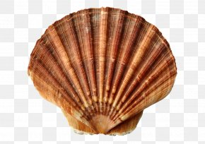 Seashell - Clam Oyster Seashell Lobster Seafood PNG