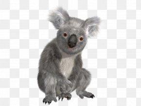 Koala - Koala Bear Sloth PNG