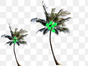 South Coconut Establish Body Material - Arecaceae Coconut Tree PNG