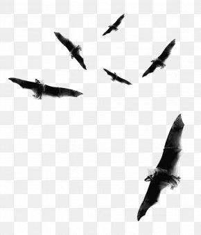 Bat - Bat Flight Halloween Clip Art PNG