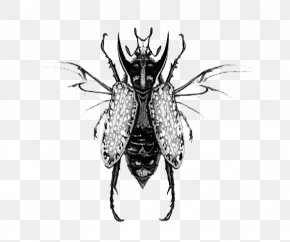 Black And White Cockroach Illustrations - Cockroach Black And White Illustration PNG