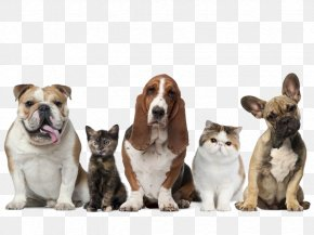 Puppy Or Kitten Sitting In A Row - Pet Sitting Dog Cat Pet Insurance PNG
