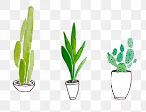 Cactus - Cactus Watercolor Painting Drawing Succulent Plant Plants PNG
