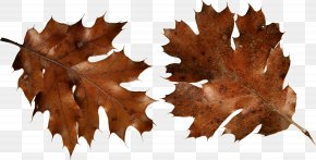 Autumn Leaf - Autumn Leaf Color Brown Clip Art PNG