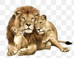 Lion Image Image Download Picture Lions - Lion Leopard Tiger Felidae PNG