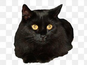 Black Cat - Bombay Cat Siberian Cat Black Cat Clip Art PNG