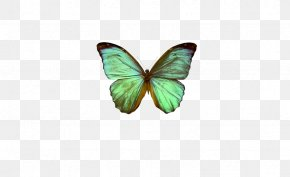 Light Blue Mint Green Butterfly - The Globalization Of World Politics World Politics: International Relations And Globalisation In The 21st Century PNG