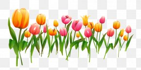 Tulip - Tulip Flower Computer File PNG